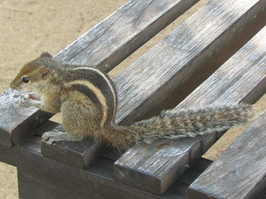 Heritance Ahungalla : Resident squirrel