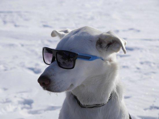 Iniakuk Lake Wilderness Lodge: Mod was a cool dog