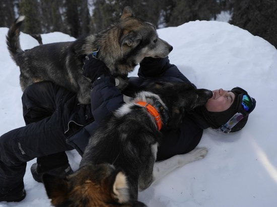 Iniakuk Lake Wilderness Lodge: The dogs are very friendly