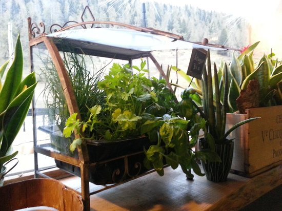 Green Ecolodge : restaurant