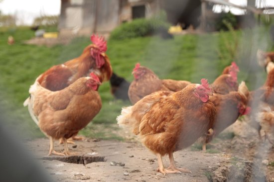 Domaine de Bois-Bougy : Chicken coop across the B&B.
