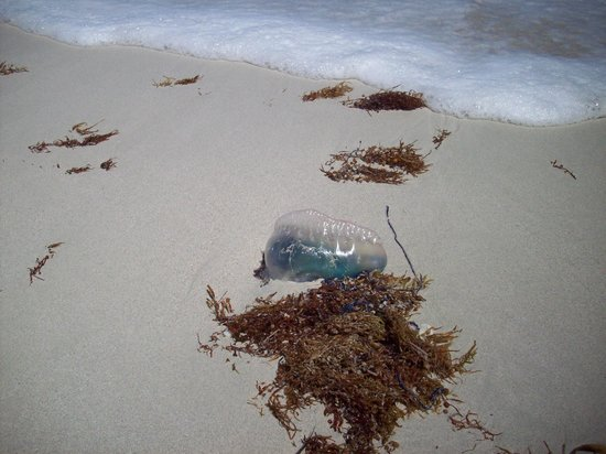 Breezes Bella Costa: Stay clear of the Jelly Fish tentacles