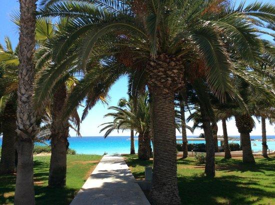 Nissi Beach Resort: Blick von der Terrasse der Beach Suite