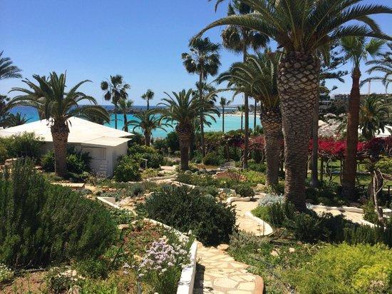 Nissi Beach Resort: Blick beim Mittagslunch
