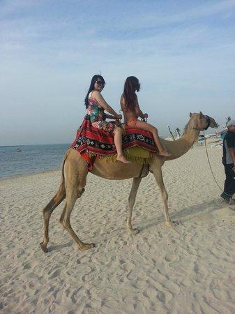JA Jebel Ali Beach Hotel: Children love the camels Nadia & Serba