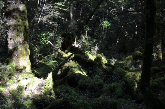 Fiordland National Park (Te Wahipounamu): Fjordland 3