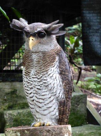 Kuala Lumpur Bird Park : oiseaux magnifiques