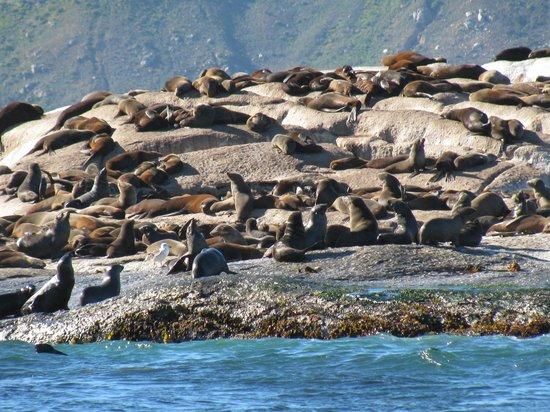 Duiker Island: Lounging in the sun