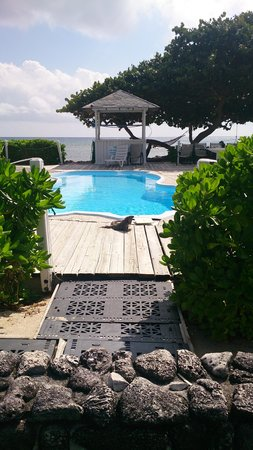 Paradise Villas: Iguana sunbathing by the pool