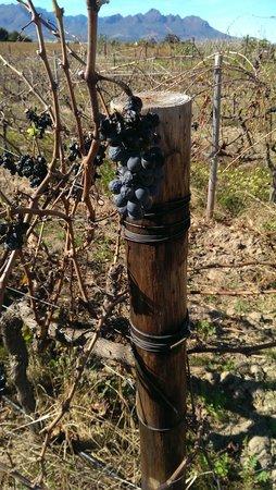 Bikes 'n Wines : Cycling by vineyards...