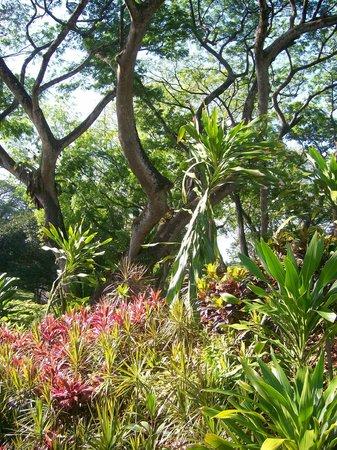 Jardines Botánicos de Singapur: Plants in Botanic Gardens