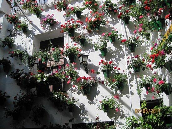 Hesperia Córdoba: Patio