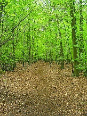 Forest Holidays Thorpe Forest: Thorpe woodlands
