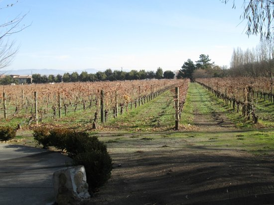 Valley Wine Tours : Grape Vines
