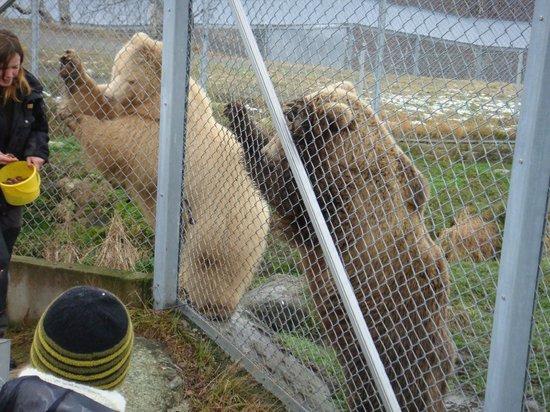 Feeding A Fox Picture Of Polar Park Bardu Municipality