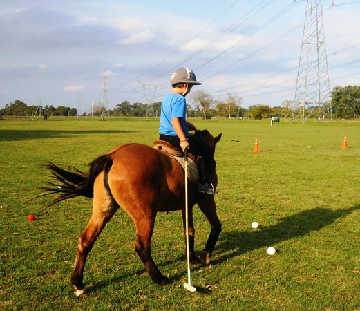 Polo Elite: Other 9 year old, Wiley