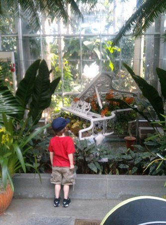 United States Botanic Garden : As you walk into the garden you see this grand piano. With classical music playing in the back g