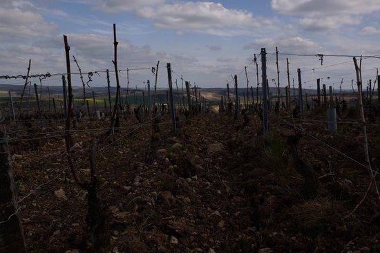 Chablis Vititours: Au coeur des vignes pour les explications