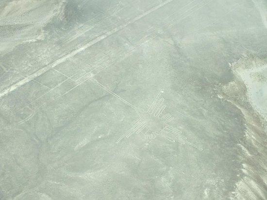 Lineas de Nazca: colibri