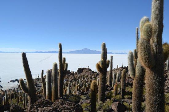 インカ ワシ島