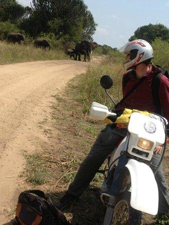 Walter's Kampala Boda Boda City Tours: Motorbike game drive at Queen Elizabeth National park