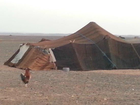 Camels House: D