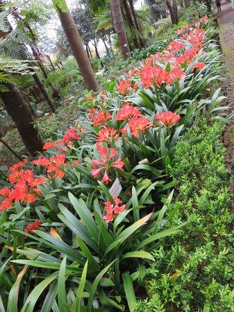 Monte Palace Madeira : Lillies
