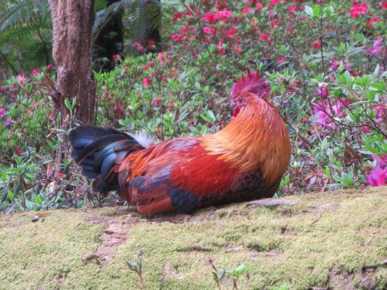 Monte Palace Madeira : Hen