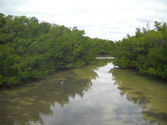 Casa Playa Resort: Lover's Key canal