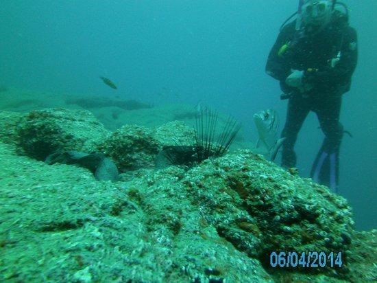 Deep Blue Diving Base: diver watching moray eel