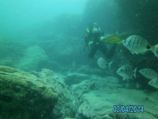 Deep Blue Diving Base: diving