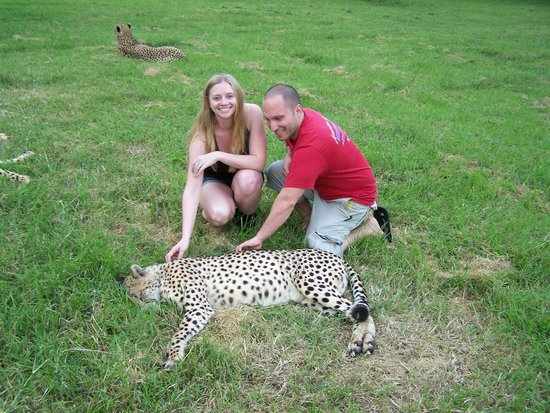 Emdoneni Cheetah project: One of the four Cheetahs on the tour