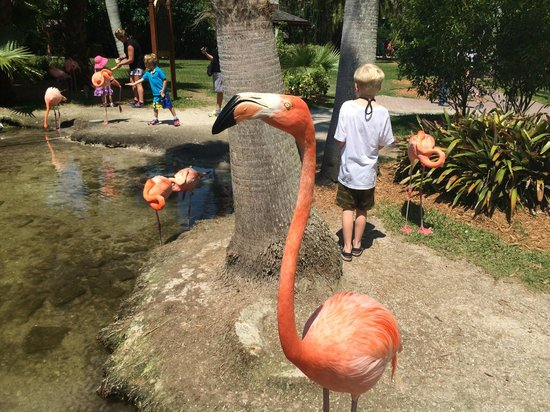 Sarasota Jungle Gardens : Up close and personal with Number 38!
