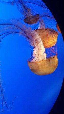 Ripley's Aquarium of the Smokies: So graceful.