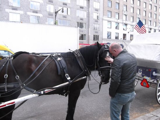 NYC Horse Carriage Rides: Our lovely horse, Sylvia