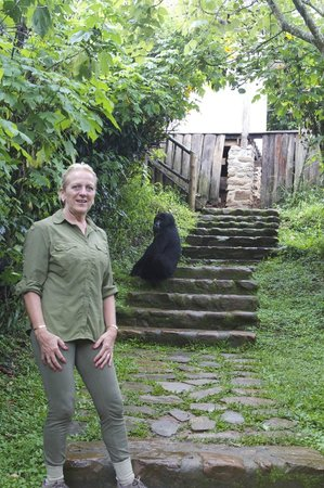 The Engagi Lodge: Gorillas in the lodge!
