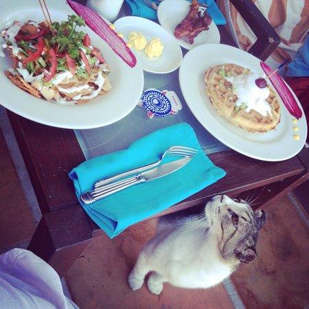 Casa de los Suenos: Breakfast included and the cat came to get his cream ;)