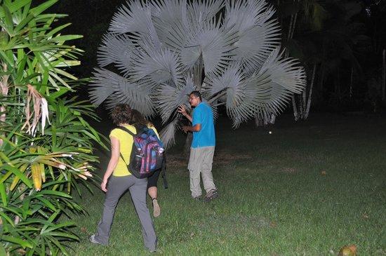 Bosque del Cabo Rainforest Lodge: Night Tour