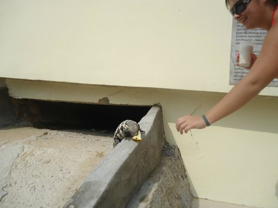 Dreams Huatulco Resort & Spa: Feeding Iguanas