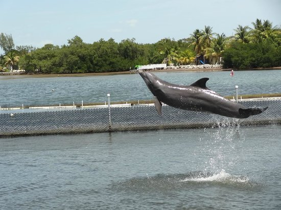 Dolphin Research Center : exuberance