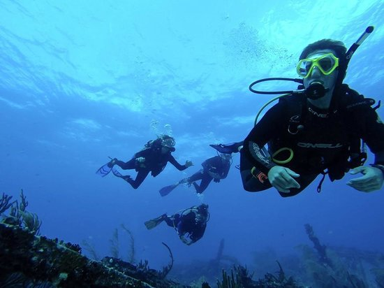 Blue Life Diving