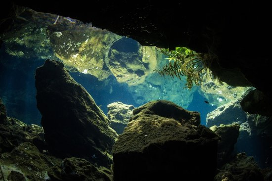 Blue Life: Under water view