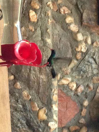 Hotel Rio Vista: Humming bird at feeder at the hotel