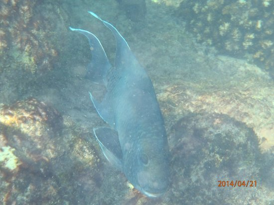 Grand Palladium Vallarta Resort & Spa: aquatic fauna