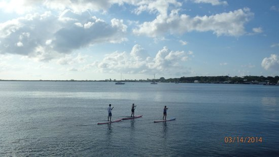 The Lighthouse : paddleboarders