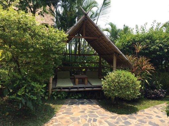 Old Tree's House: le jardin