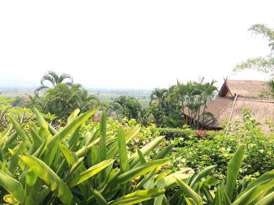 Old Tree's House: la vue du jardin