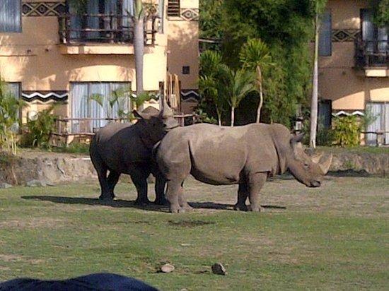 Bali Safari & Marine Park : Melihat hewan secara langsung dari balik kaca bus