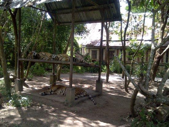 Bali Safari & Marine Park : Ada juga hewan liar, tapi sangat aman