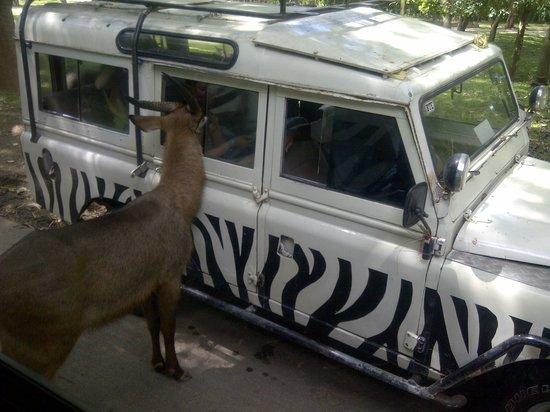Bali Safari & Marine Park : Bisa sewa Jeep utk berkeliling